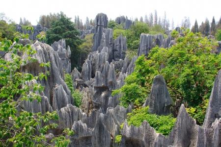 yunnan: Shi Lin Stone forest national park in Yunnan province, China Stock Photo