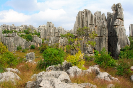 Shi Lin Stone forest national park  Yunnan  China
