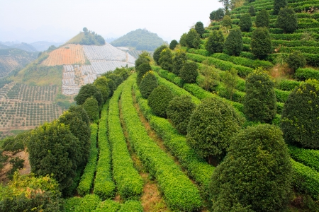 Yangshuo tea terrace  Yangshuo county  China  Stock Photo