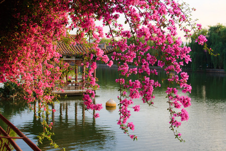 china landscape: Flowers in Chinese park  Kunming  China  Stock Photo