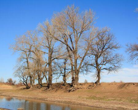 volga river: River and trees. Volga river. Volgograd. Russia.