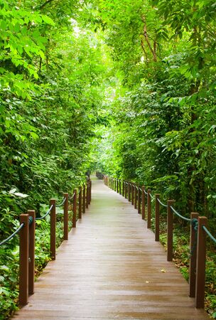 Forest road in Singapore Botanical garden.