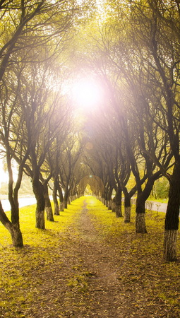 Beautiful alley of trees