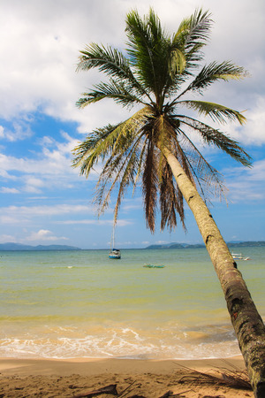 Beautiful palm tree on the beach in Port Barton. The island of Palawan. Philippines.