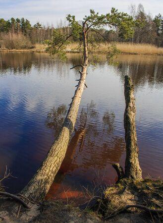 Baltic sand dunes. St. Petersburg. Russia. Stock fotó