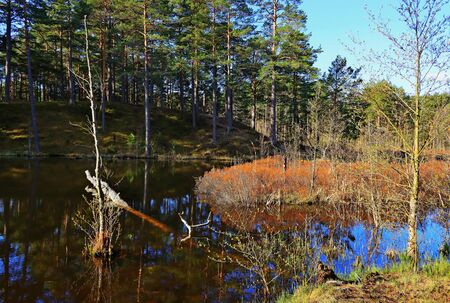 Fairytale forest. Nature of northwest of Russia. Stock fotó