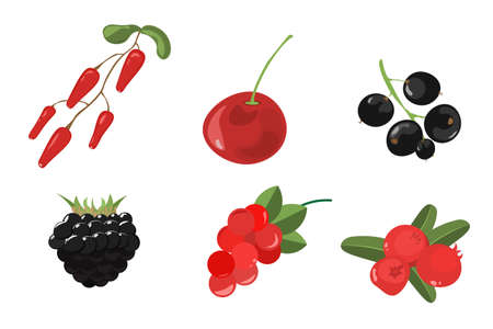 Set of berries painted in a watercolor style. Strawberries, cherries, raspberries, blackberries, blueberries,  grapes, cherry. Vector illustration EPS10 Illustration