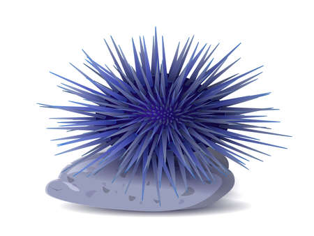 Sea hedgehogs or urchin of blue color. Sea urchin illustration, drawing, engraving, ink, line art