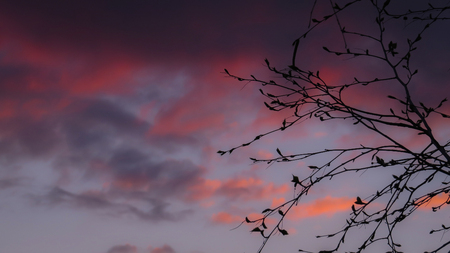 Tree branches silhouette with purple sunset sky in background and space for text