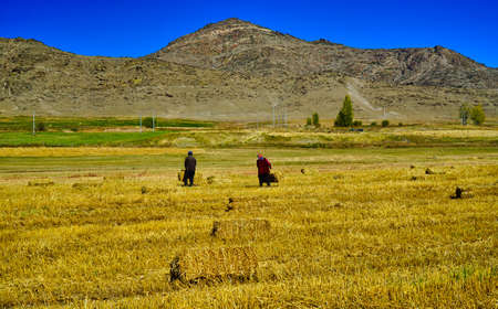 The woman and the man were walking on the grass with a haystack in their hands. Picturesque natural landscape. Keketuohai Scenic Area. Xinjiang, China. 2018