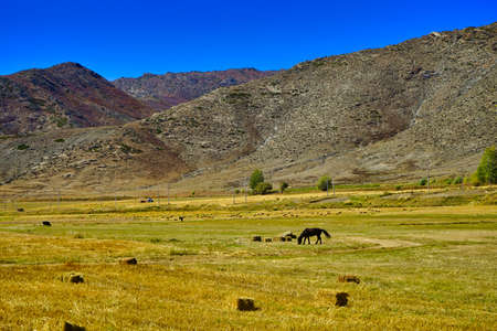 A horse is grazing. Grass is rolled into squares and arranged. Blue sky. Picturesque natural landscape. Keketuohai Scenic Area. Xinjiang, China. 2018