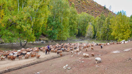 The shepherd rode his horse and drove his flock along the forest road. Picturesque natural landscape. Keketuohai Scenic Area. Xinjiang, China. 2018 Banque d'images
