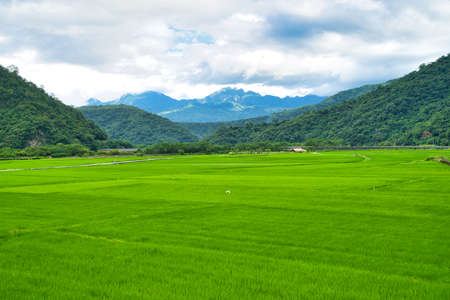 Green rice fields. Blue sky, white clouds, mountains are like idyllic paintings. 30 hectares of rice cultivation area. Yushan Nan'an Visitor Center, Hualien, Taiwan. Sep. 2021
