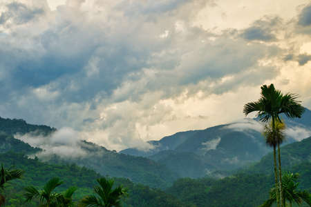 The green mountain range surrounded by clouds and fog. Betel nut trees. Bihushan Tea Garden, Meishan Township. Chiayi County, Taiwan. Sep. 2021 Banque d'images