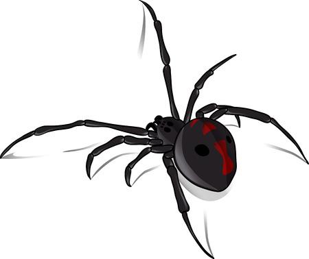 viuda: Creepy crawly Viuda Negro listos para asustar Vectores