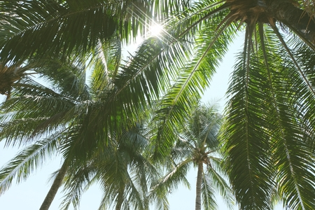 Under coconut palm tree with blue sky. Imagens