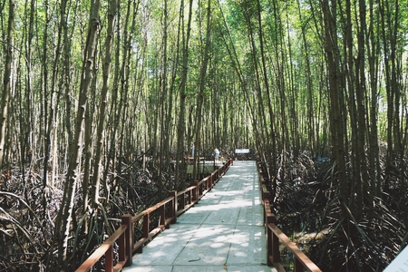 Mangrove forest with wood walk way, Pranburi National Forest Park Thailand. Banco de Imagens