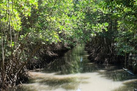 mangrove forest, Pranburi National Forest Park Thailand. Banco de Imagens