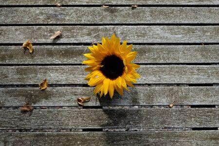 High angle shot Sunflower on wooden table background. Zdjęcie Seryjne