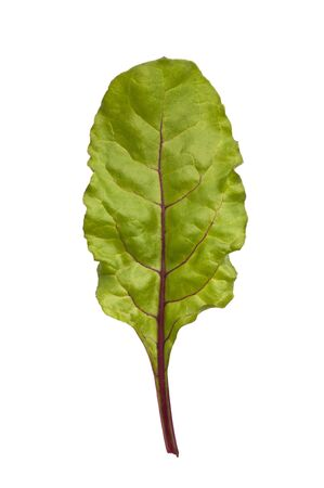 Young beetroot leaf shot from above isolated against a white background