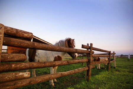 horse stable: Two horses on green lawn behind wooden fence
