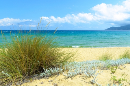 Beach grass on beautiful wild beach with with turquoise sea Stock Photo