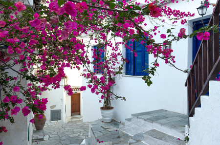aegean: Traditional mediterranean house covered with pink flowers - Skiathos, Greece