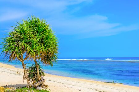 vividly: A deserted tropical beach in Bali with a tree in the foreground and the vividly colored ocean in the background Stock Photo