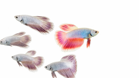 colorful fish isolated on white background.