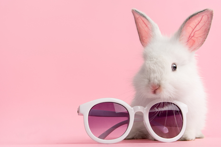 Cute bunny rabbit on pink background with fashionable pair of glasses.