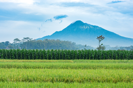 Farmland in Indonesia with the active volcano Mt Merapi rising up into the clouds.  Landscape image.