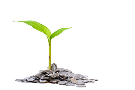 A small plant growing from pile of coins suggesting finacial growth and prosperity.