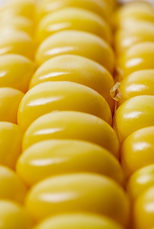 close up of sweet corn grain photo