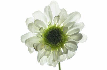 unfold: White flower