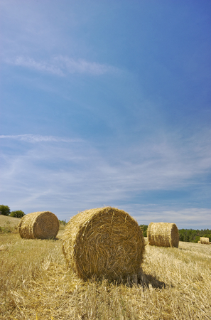 Hay roll on a sunny field