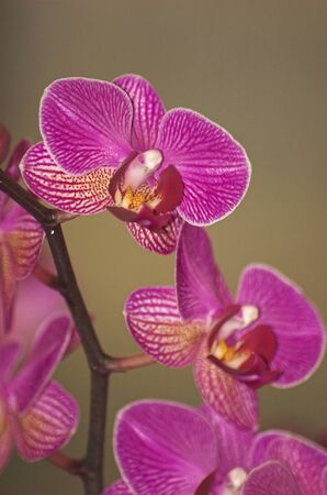 unfold: Colorful orchids -  still life on flower exposition in Holland