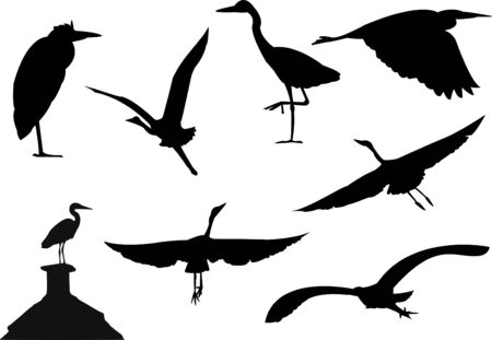 heron: Rasterised version of a vector image of several silhouettes of wild grey heron birds Stock Photo