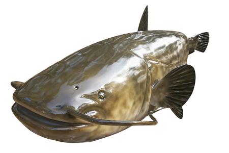 model fish: Catfish - fish model isolated on white