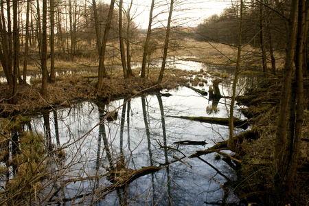 Polish marshland - swamp landscape in early spring