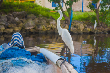 great: great egret Stock Photo