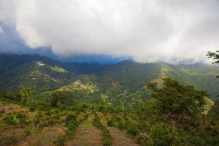 Blue Mountain coffee plantation Jamaica