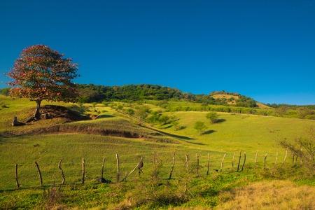 The meadow landscape