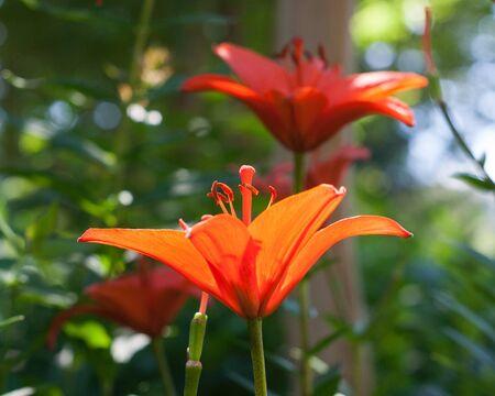 Orange flowers on a sunny day 스톡 콘텐츠
