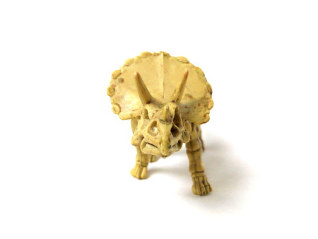 Close up of triceratops skeleton dinosaur toy isolated on white background.