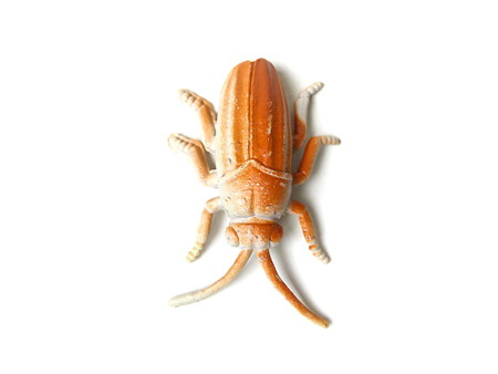 Close up of cockroach toy isolated on white background.
