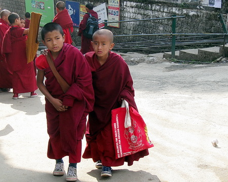 Tibetan Buddhist Child Monks Dharamsala India Peopple