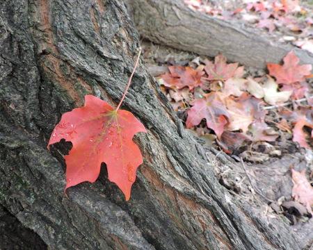 Bright Orange Maple Leaf Autumn Background Texture Stock Photo - 46781167