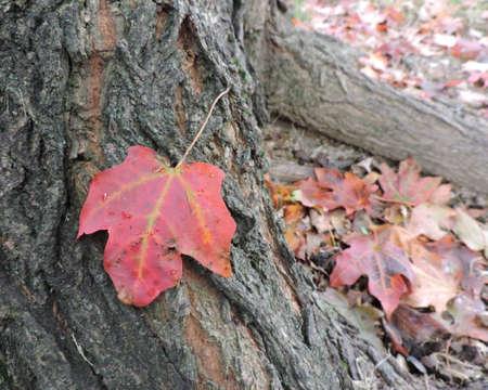 Orange Autumn Leaf on Ground