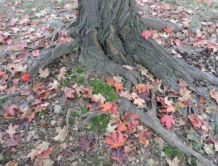 Fallen Autumn Leaves Around Tree Trunk Stock Photo - 46781188