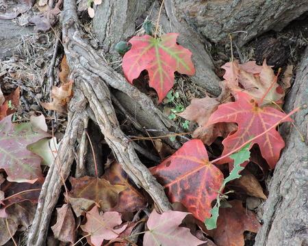 Autumn Seasonal Leaves Tree
